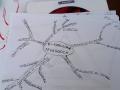 Una mappa per la pedagogia