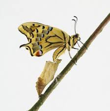 bruco o farfalla?